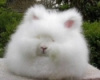 rabbit_tofsan userpic