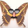 ehvul_butterfly