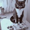 koochie☆koo: cat2
