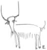 Коза-коза