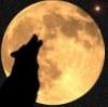 furrysunwolf