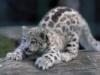 wiry_faerie_cat userpic