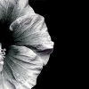 orchidpavilion userpic