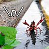 crab | \o/