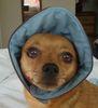 Pippin bonnet
