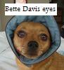 Shirebound: Pippin bonnet - Bette Davis eyes