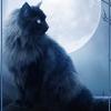 Кошка Элар