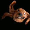 san_che: собак