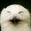 bird_rare