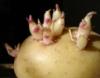 cannibal_potato userpic