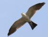 calenorn: Kite