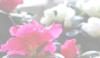 mrs_marie userpic