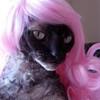 Kitty glam