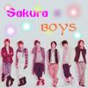 sakura boys
