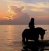 girl, horse, ocean