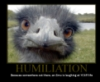 joke, humiliation, Emu
