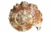 helmet_shell userpic