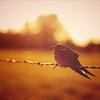silental userpic