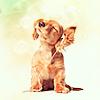 Manu: dog music