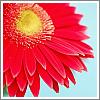 tidileewinkz userpic