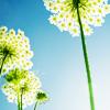 цветы ввысь