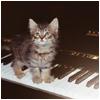 maestro kitty