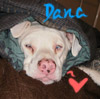baby, puppy, Dana