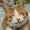h cat