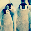 Cute penguins!