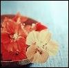 Bowl of petals