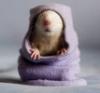 мышь в вязаном
