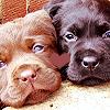 Lyss: misc. ♣ lots {mord'pups;berdine&raina}