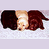 Lyss: misc. ♣ lots {mord'pups;trio}