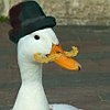 dr_quackers userpic