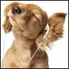 Puppy!Phones