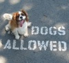 dogs allowed