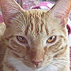 cat_titties userpic