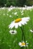 esjohnston userpic