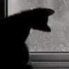 котенок и окно
