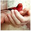 Bird | Hello Mr. Robin