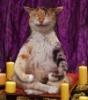 yogi-cat