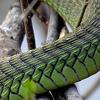 absolutely fabulous in snakeskin