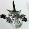 flying unicorn battle cat
