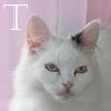 x_timea_x userpic