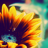 sunflower by phlourish_icons