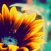 sunflower by phlourish_icons
