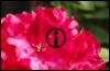 florentb userpic