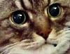 lulz//sadcat
