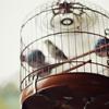 Misc - Birdcage
