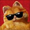 rufous_cat